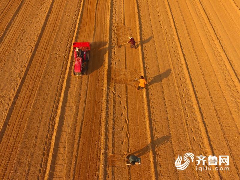 3月6日,航拍的山东聊城市茌平县贾寨镇刑胡刘村村民驾驶拖拉机在整理土地的场景。216_副本.jpg