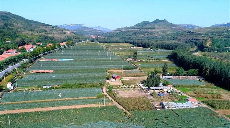 临朐在全国率先启动农民专业合作社质量提升整县推进试点