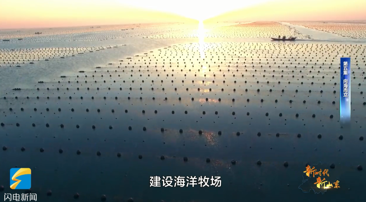 """三文鱼黄海冷水团""""安家"""" 一个网箱可实现5万水体的养殖量"""