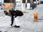 """寿光向""""狗狗主人""""发出倡议 在安全卫生和文明上请这样做"""