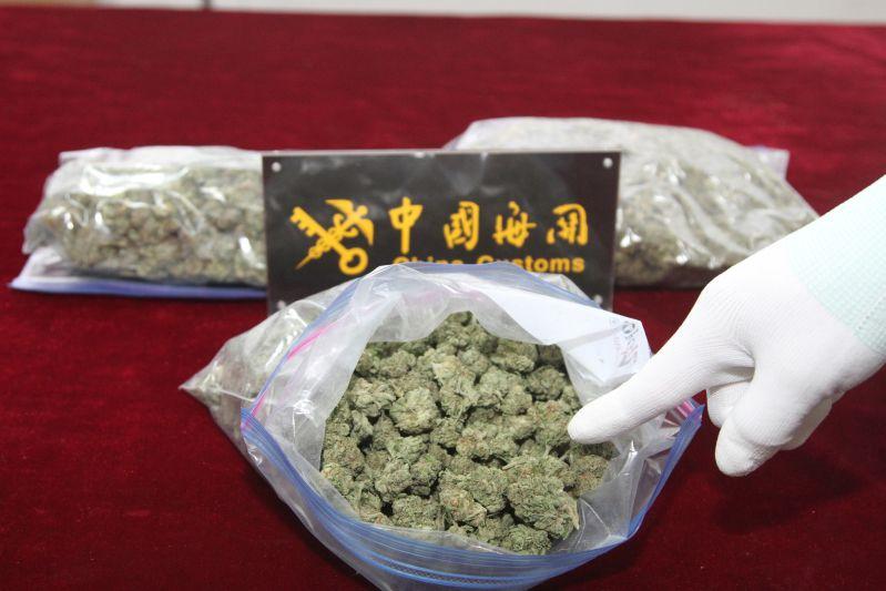 青岛海关截获毒品大麻植物500余克