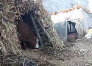 传滨州男子寒冬带90多岁母亲挖地窖容身? 真相是......