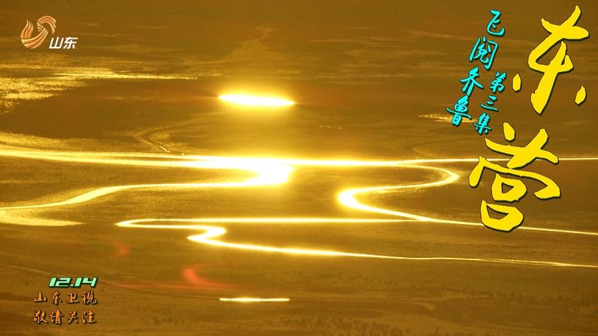 63秒丨金滩粼粼 芦花飞雪……东营这些美景比水天三色更耀眼