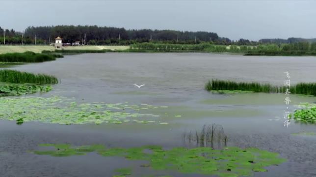 89秒|菏泽:严格划定生态保护红线 田园中鸭群欢歌阵阵丨《飞阅齐鲁》