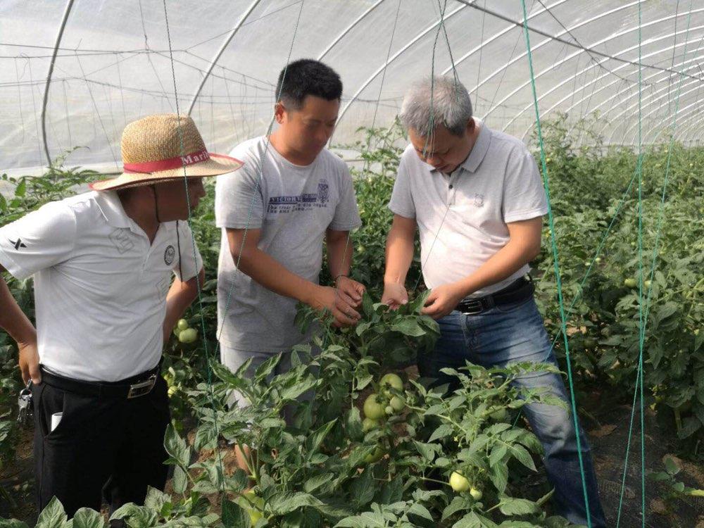 渝鲁科技扶贫再结硕果 重庆能种甜椒和西甜瓜了