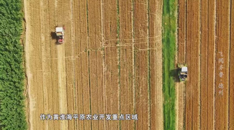 西红柿像葡萄爬满架 农民像工人开机器……德州智慧大棚是这样的丨飞阅齐鲁
