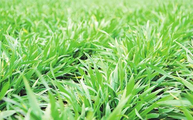 山东:小麦冬前苗情总体较好 一类苗面积比去年增加
