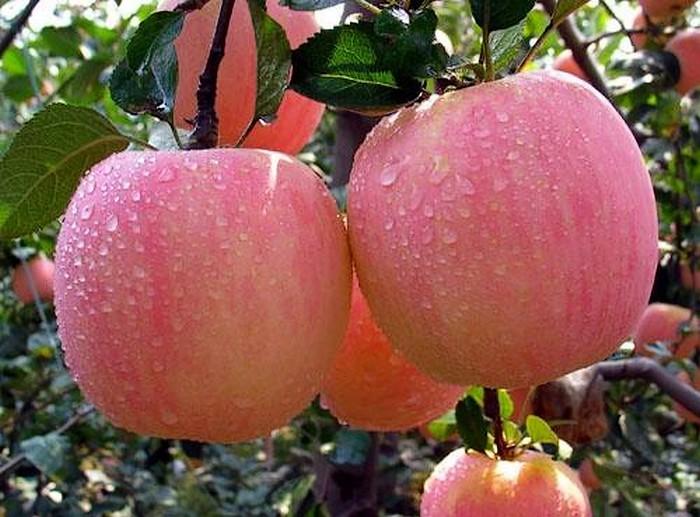首批山东省特色农产品优势区名单公示