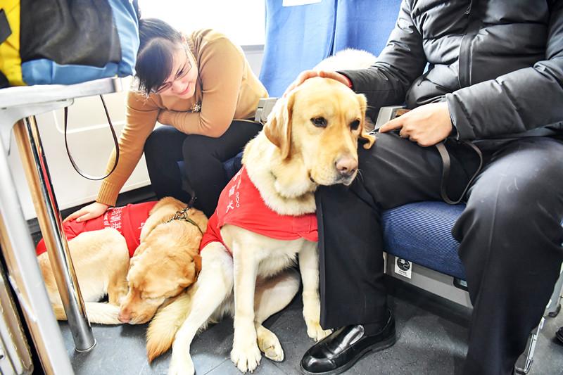 点赞!盲人夫妇携导盲犬登火车 关爱服务暖人心
