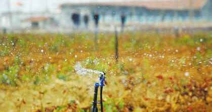 山东将实施有机肥增施替代工程 2020年商品有机肥施用量428万吨