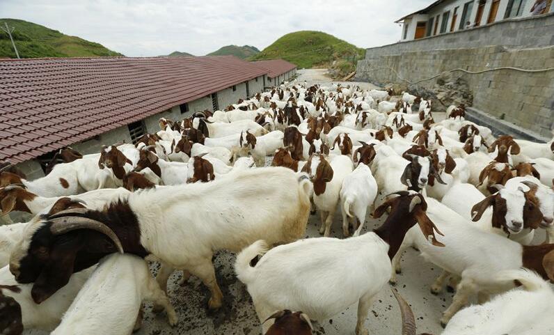 2020年山东畜禽粪便处理利用率达到90%以上