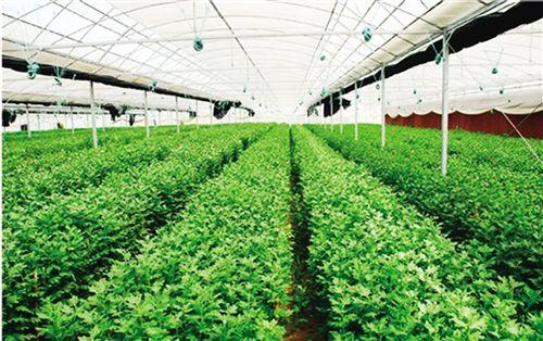 淄博11家企业上榜第7批农业产业化省级重点龙头企业名单