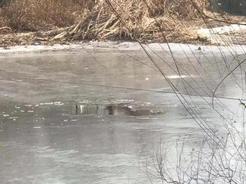 16秒|滨州一23岁小伙破冰钓鱼 不慎溺水身亡