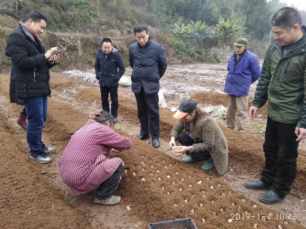 山东济宁组织食用菌种植专家到重庆万州开展现场技术指导