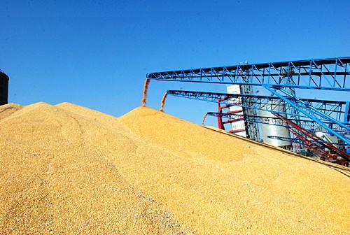 2018年山东粮食总产1064亿斤 棉花油料等生产形势保持稳定