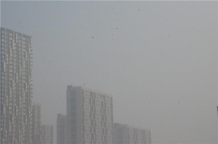 海丽气象吧|日照发布大雾橙色预警信号 请注意防范
