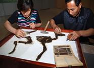 全省率先数字化!临朐5200余件山旺古生物化石档案管理升级