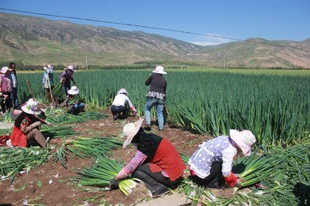 """山东省农业农村厅:农业脱贫攻坚工作作风建设""""十要、十不准"""""""