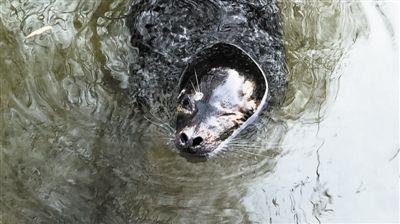 124秒|趵突泉两只斑海豹被送走体检 暂时不与外界接触