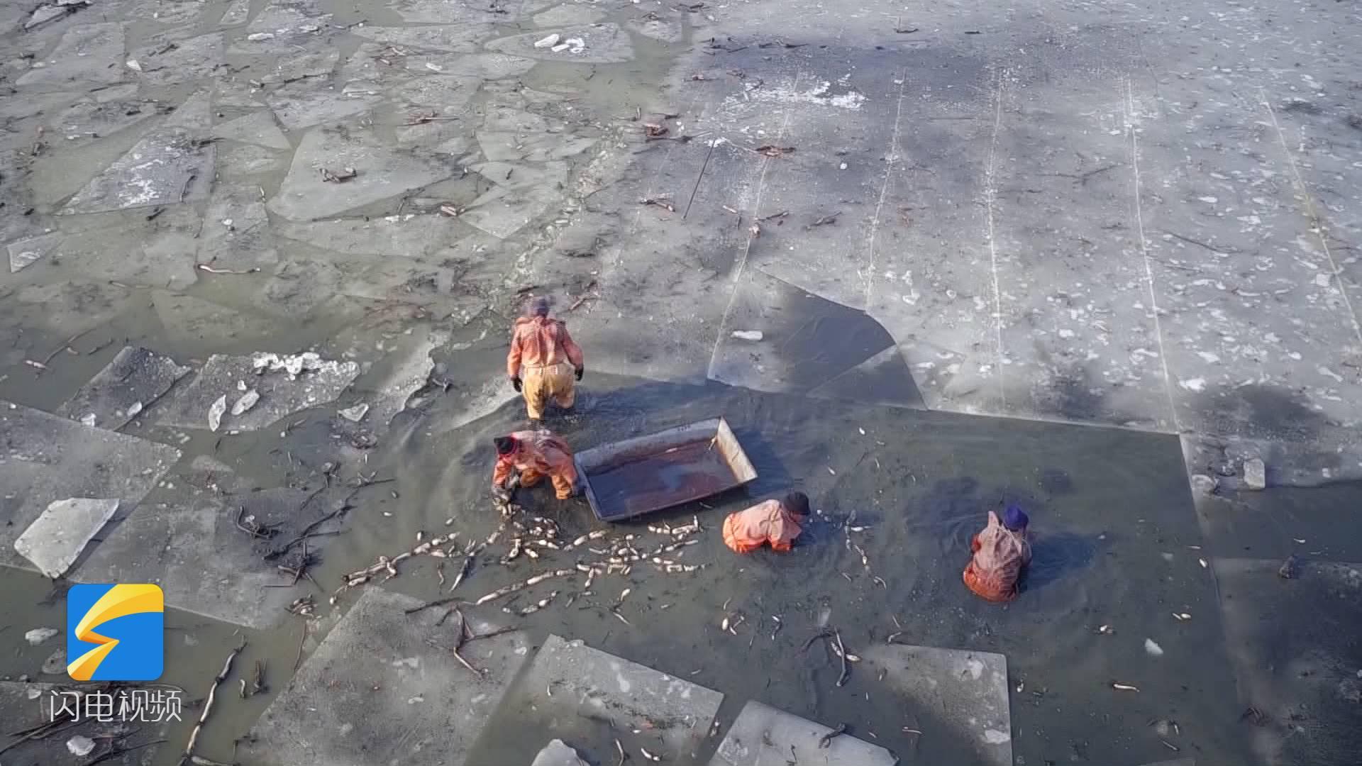 62秒丨破开20厘米的冰层只为踩藕,这种传统技艺你见过吗?
