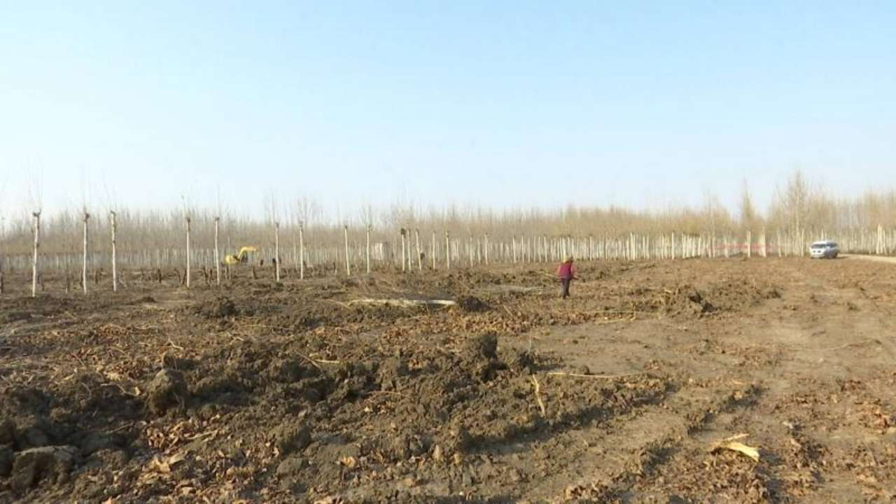 记鲁南高铁建设二三事:为给高铁让路 村支书带头移栽树木