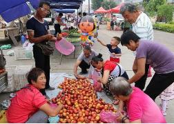 淄博:古稀老汉偷水果被店主怒打 为何老汉店主双双被刑拘