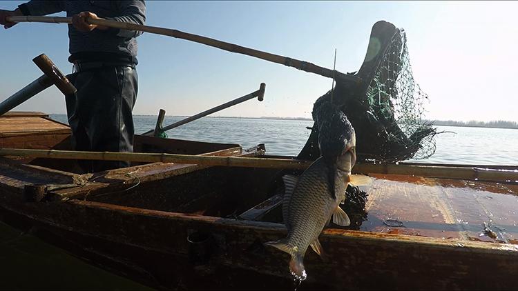 拾城记丨南阳岛上的放鹰人!带你体验不一样的渔民春节