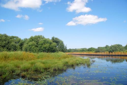 山东湿地保护率提高到45% 力争明年提高到70%以上