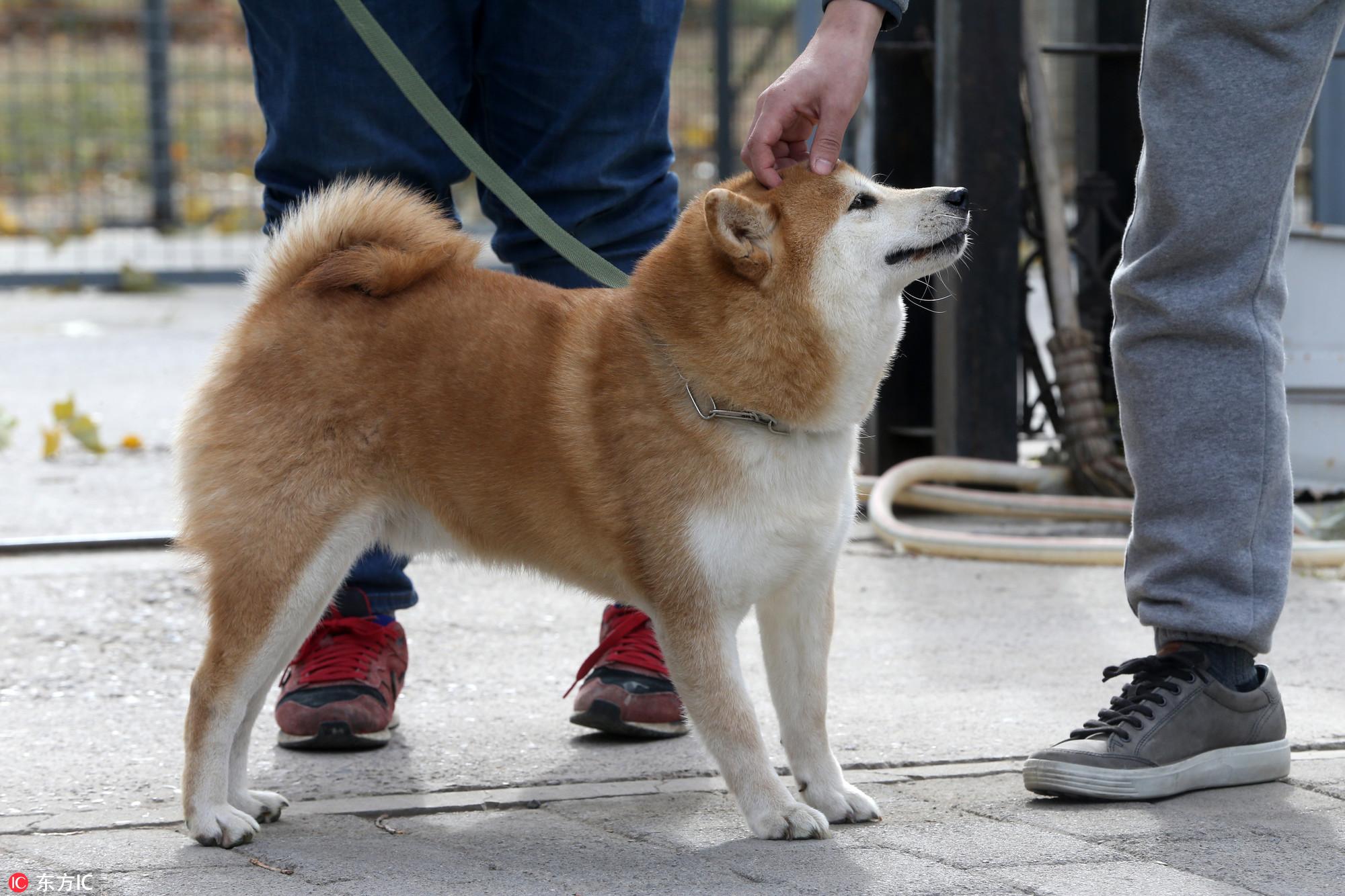 最高罚款2万元!高唐县发布城区文明养犬通告