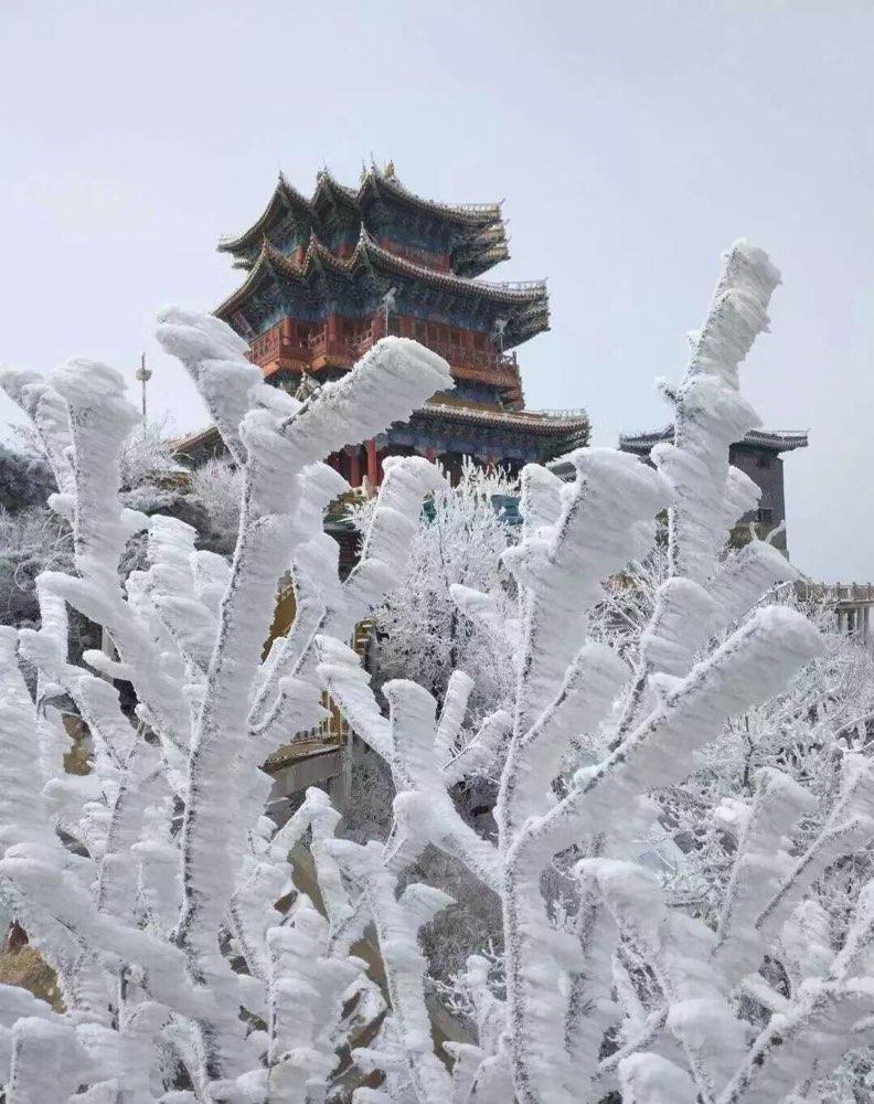 组图丨雾凇奇景!初春的沂山宛如水晶宫殿