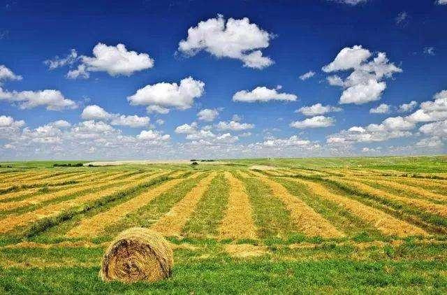 重磅! 山东发文:乡镇政府为农业补贴第一责任主体