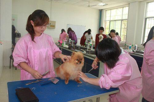 农村兽医临床用药五大误区需提防