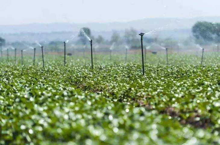 到2020年山东确保重要农作物消费有尺度可依
