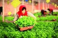 潍坊出台2019年春季农业生产保障措施