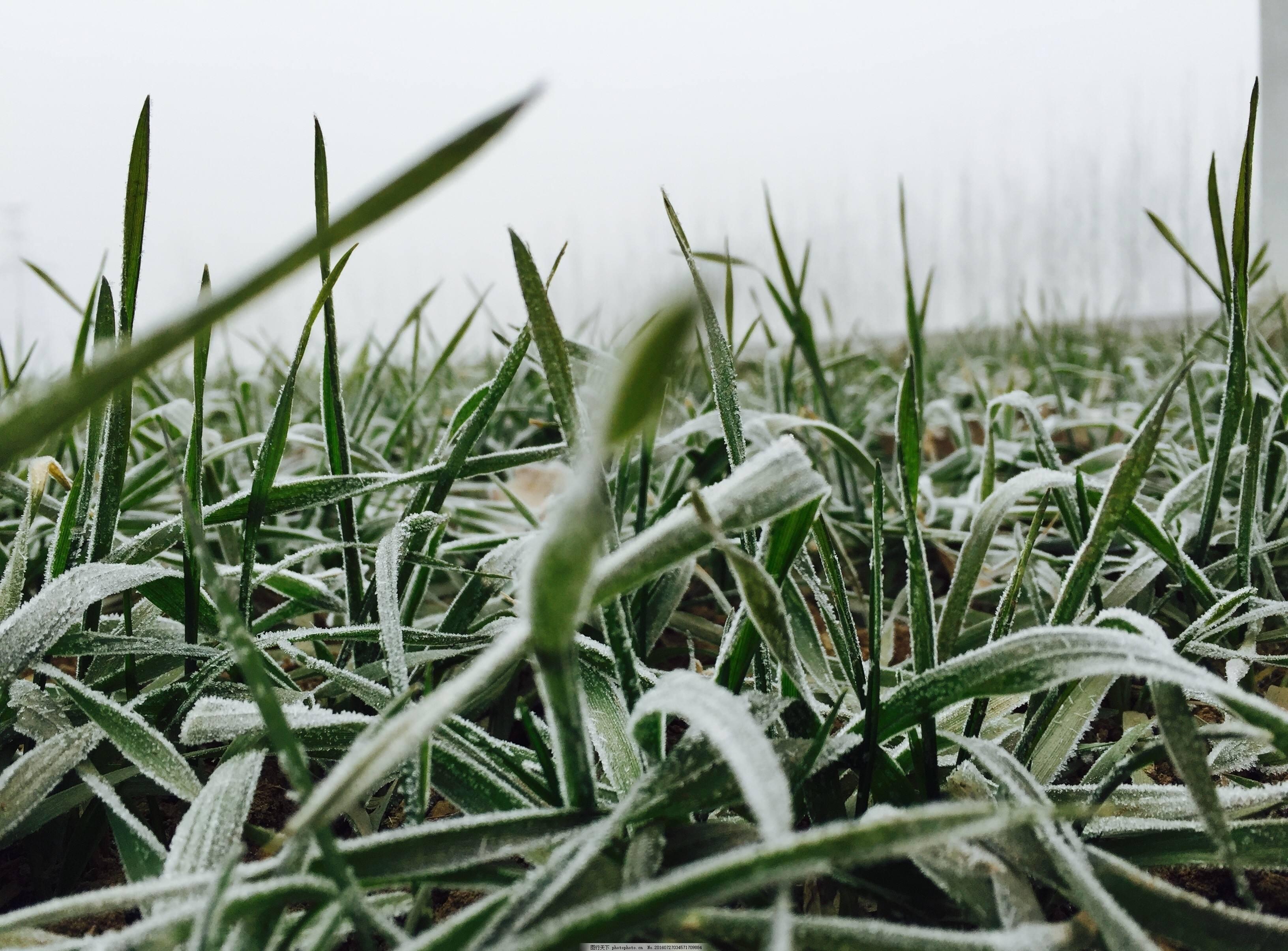 农业专家建议:因地、因墒、因苗做好小麦管理