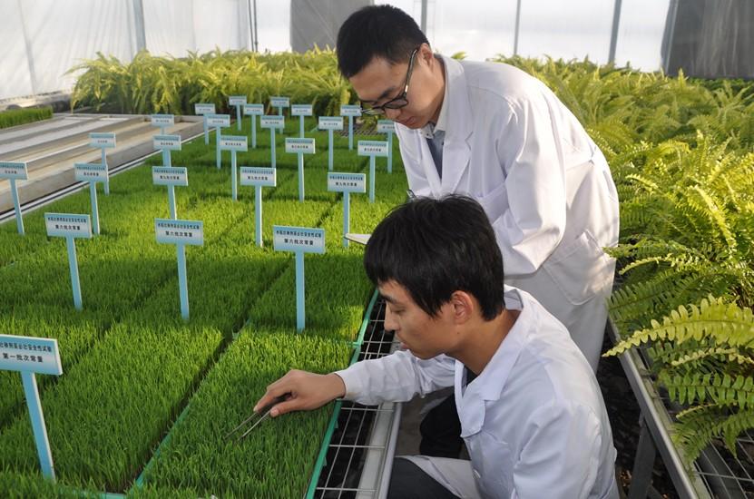 山东公示第一批区域性良种繁育基地