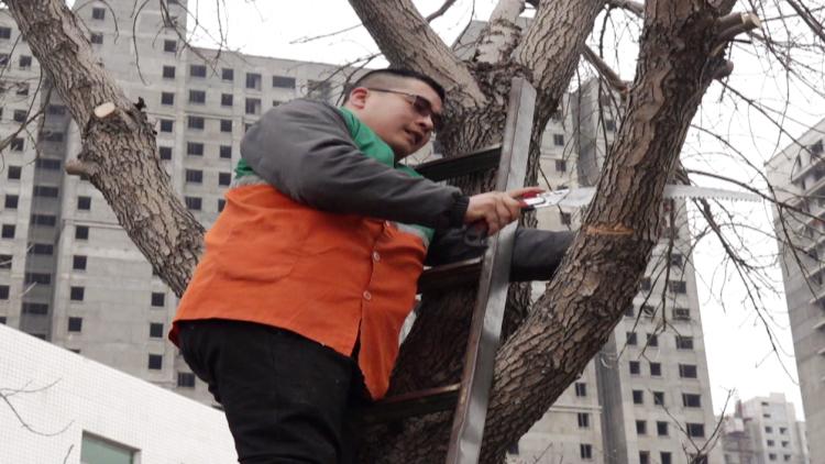 """109秒丨潍坊园林工人迎来繁忙季 8人小队一天给近500棵树""""整形"""""""