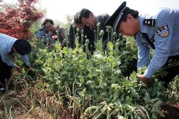 @寿光人 看到这种植物应立即举报 最高奖励10000元