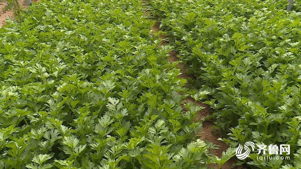 每周质量报告丨农民朋友看过来 专家教你如何正确选购使用农膜