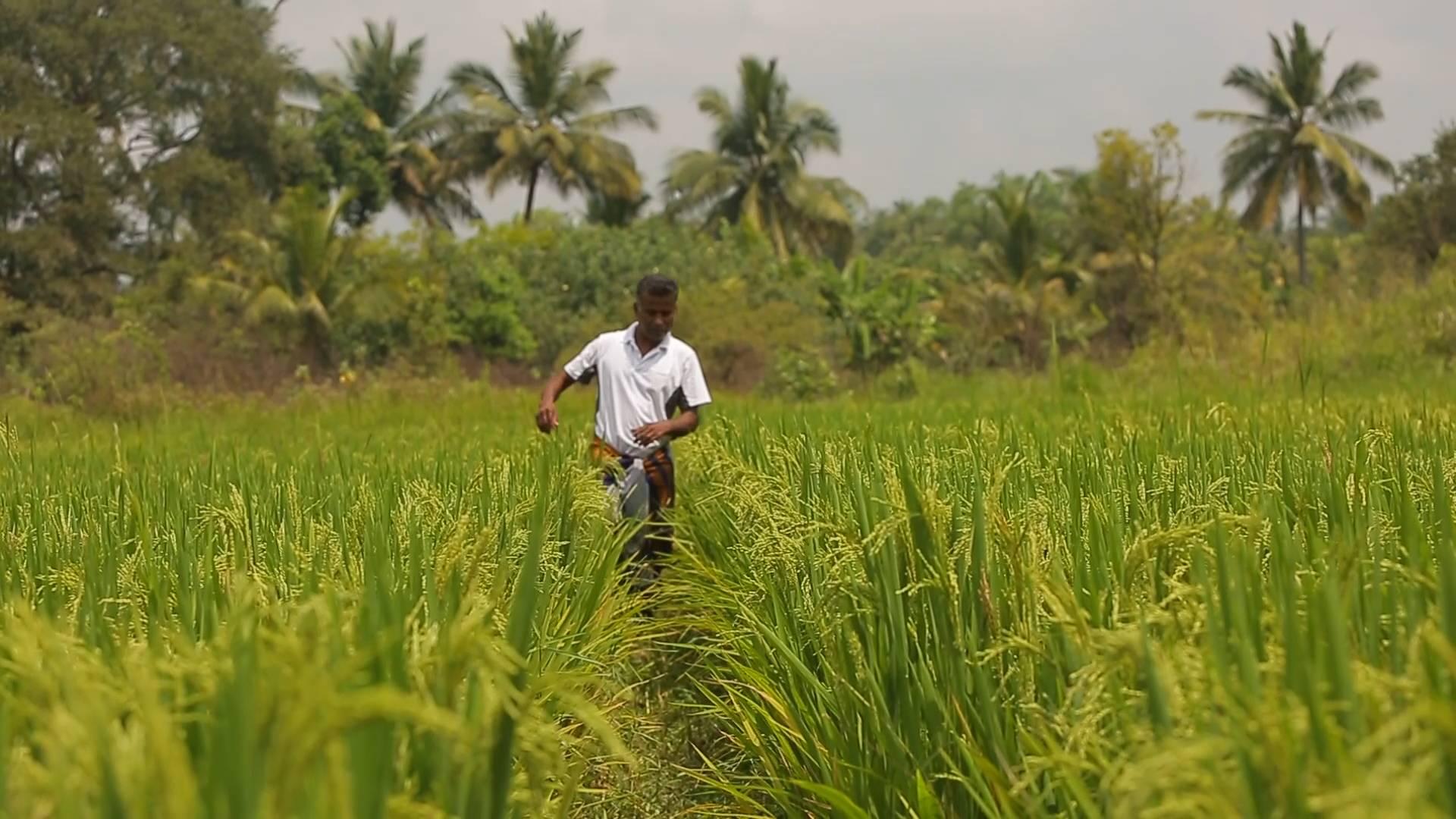 牢记嘱托 担当作为抓落实丨共赢!莱玉化工投资4000万 在斯里兰卡打造水稻果蔬种植中心