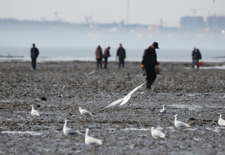 组图丨青岛市民海边享受赶海乐趣 捕捉蛤蜊海蛎子等小海鲜