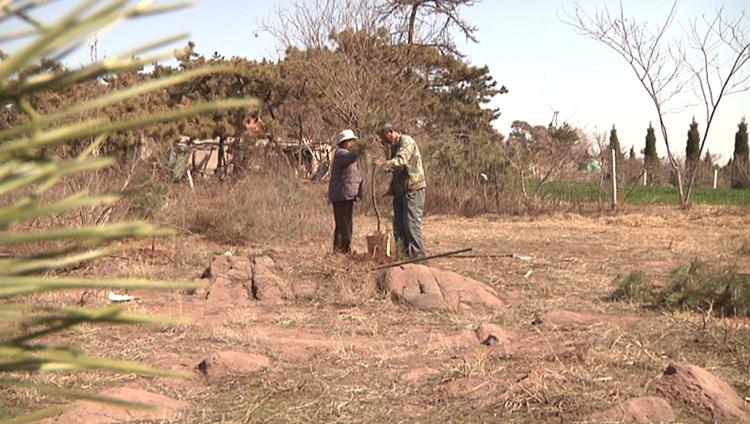76秒|植树40万棵郯城6旬夫妇历时14年把荒山染绿