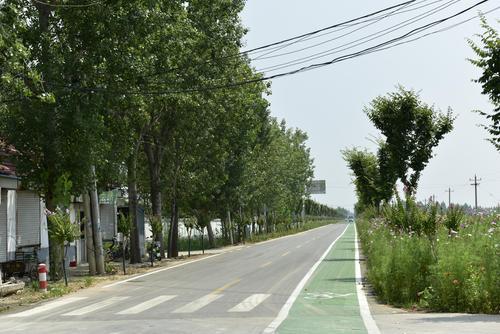 """山东今年将改造提升1.2万公里农村公路 实现""""四个百分百"""""""