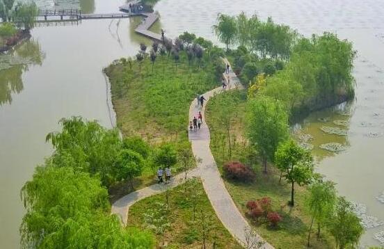 乘着春风相约台儿庄双龙湖湿地观鸟园,寻找春天的气息!
