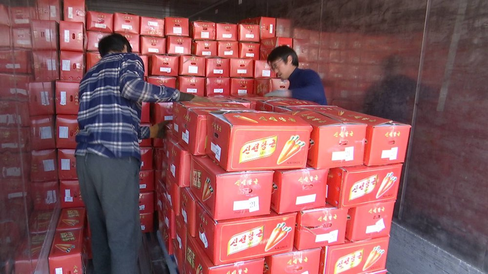 每周质量报告|5毫米樱穗致山东35个集装箱胡萝卜被退运