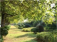 寿光今年将对19条道路及商务小区内进行绿化