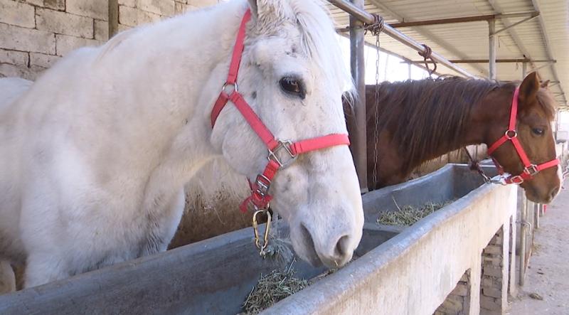 从羊倌到马倌:嘉祥小伙开起养马场走上致富路