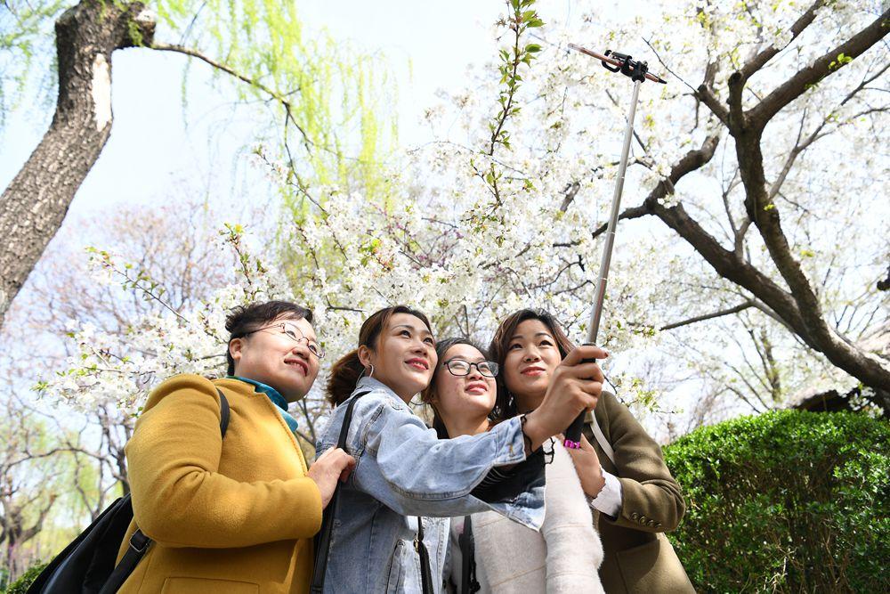 组图|樱雨缤纷季!济南第十八届五龙潭樱花节开幕