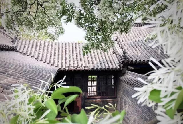 邹城赏花季开启 花期从3月持续到6月