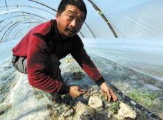 山东农业部门积极应对寒潮天气:加固大棚果树架材 渔船停港防风